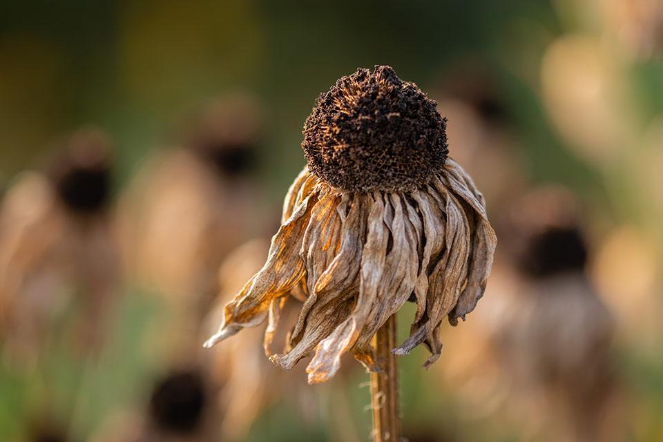 Vermaktiv Stimul pomůže ipři suchu