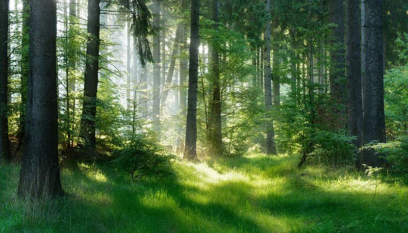 Aplikace přípravku na lesy
